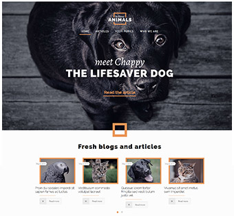 Website Design Theme Samples 7