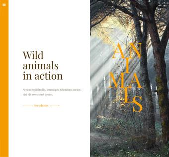 Website Design Theme Samples 70