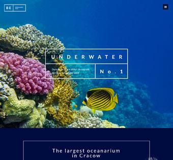 Website Design Theme Samples 49