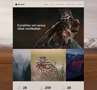 Website Design Theme Samples 33
